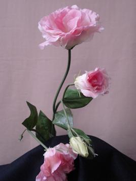 Lisianthus  Pink 1076 Cream 1073