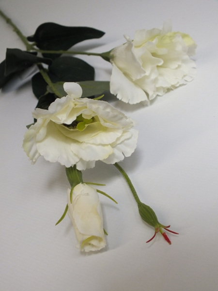 Lisianthus Spray cream 4446