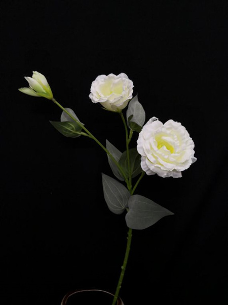 Lisianthus spray  White 4094