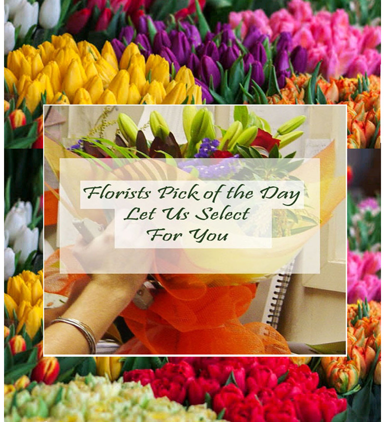 Lots of beautiful coloured tulips let our Flowerise Florists choose for you