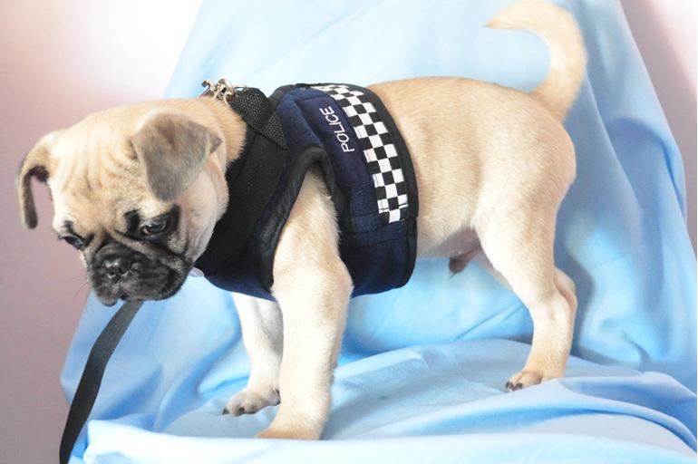 LP41 Dog harness, police