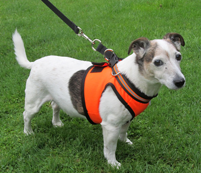 LP42 Hi Viz Reflective Dog Harness