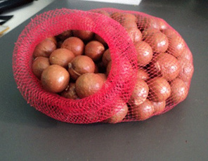 macadamia nuts in their shells