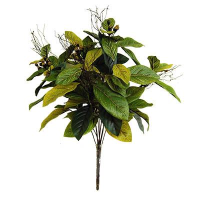 magnolia bush with twigs 4046