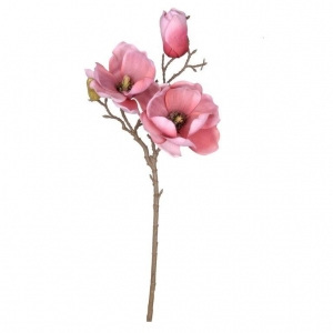 Magnolia flowering branch pink