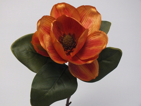 Magnolia Grandiflora Burnt Orange 1864