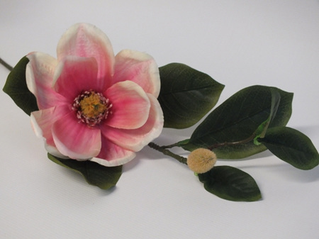 Magnolia Stem pink cream 1916