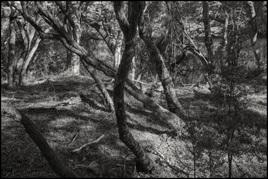 Mararoa Forest