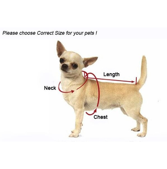 measuring your dog