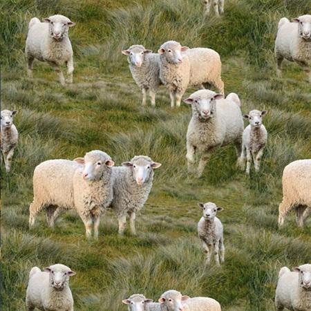 Merino Muster Sheep Lambs all over 18494