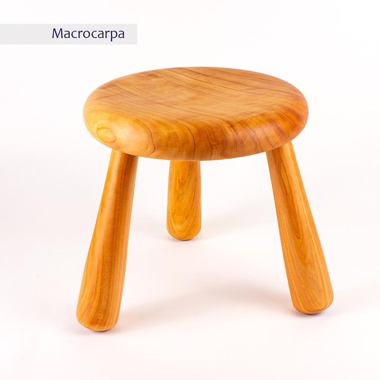 milking stool - macrocarpa