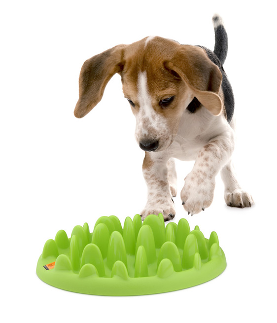 best slow feeder the fun supergrail outward and hound dog feeders bowls