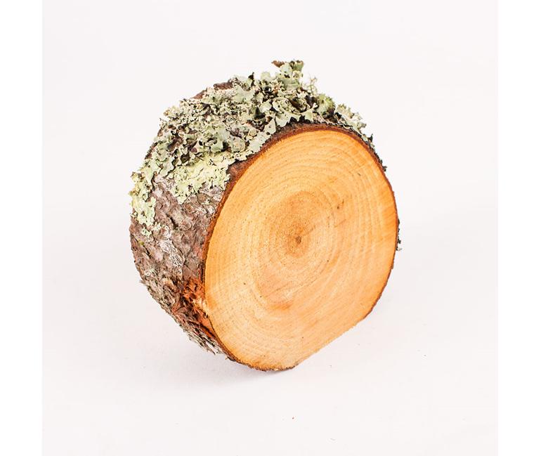 mini pine ring standing