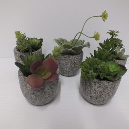 Mini pots of succulents 2306