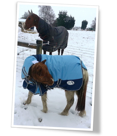 Miniature horse in the snow wearing a warm rug.
