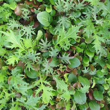 Mixed Salad Leaves Organic Approx 100g