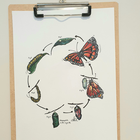 Monarch Lifecycle Greeting Card