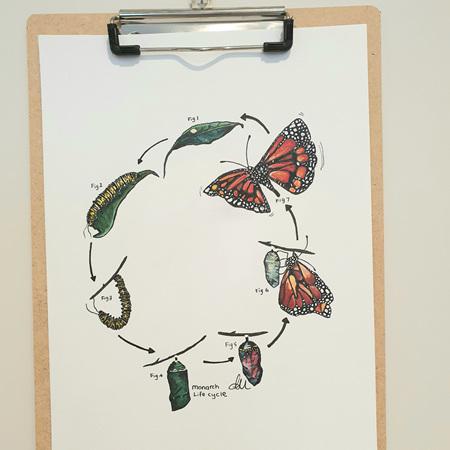 Monarch Lifecycle Prints