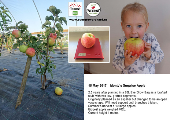Monty's Surprise Apple does exceedingly well in EverGrow Bag