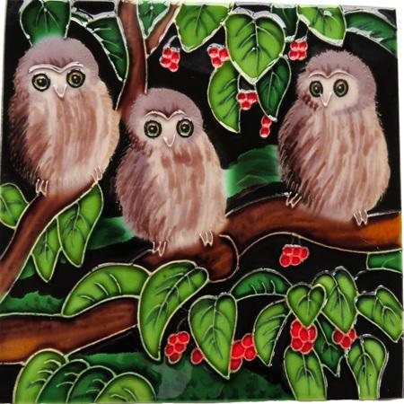 Morepork chicks in a Puriri tree CT35