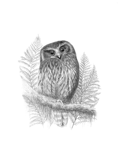 Morepork in the Moonlight - Limited Edition Print
