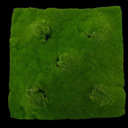 Moss mat with mounds 1454