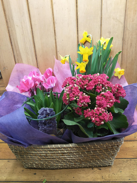Mothers Day Plant Basket