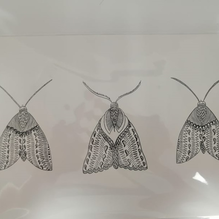 Moths Prints