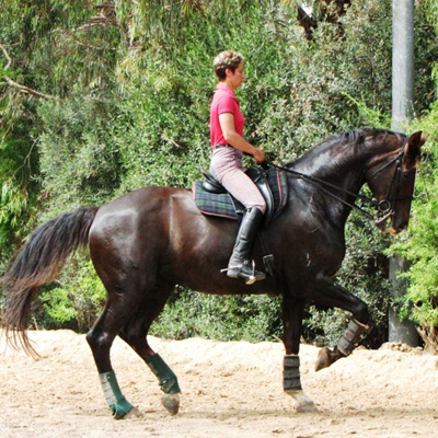 Muscle Development in the Dressage Horse