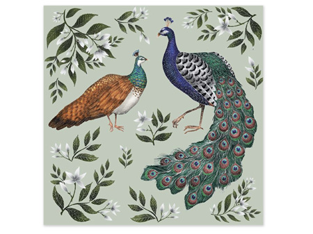Museums & Galleries Card Peahen & Peacock