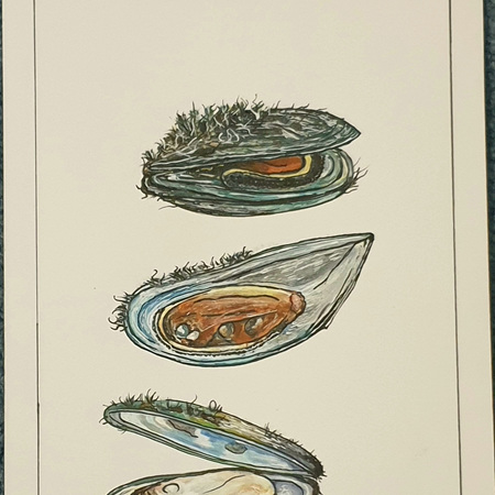 Mussels A5 Print