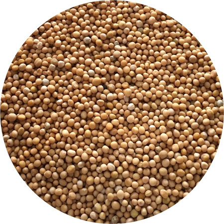 Mustard Seeds (yellow)