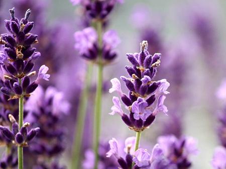 Natural & Homeopathic