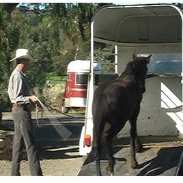Natural Horsemanship Made Easy