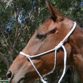 Natural Horsemanship Training Rope Halter
