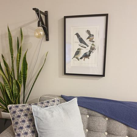 New Zealand Native Birds Prints