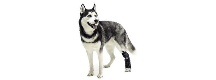 No-Knuckling Training Sock