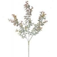 Northern Eucalyptus 4562