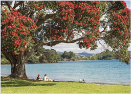 Holdson Pieces of New Zealand S4 1000 Piece Jigsaw  Puzzle Coromandel Pohutukawa