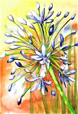 NZ Artist Blank Greeting Card Agapanthus