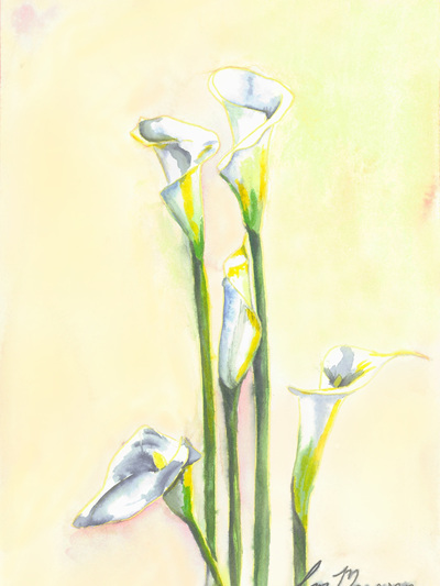 NZ Artist Blank Greeting Card Arum Lily