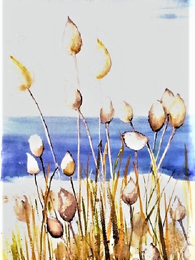 NZ Artist Blank Greeting Card Beach Grass
