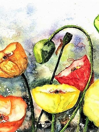 NZ Artist Blank Greeting Card Bright Poppies