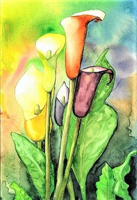 NZ Artist Blank Greeting Card Callas Lilies
