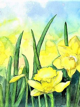 NZ Artist Blank Greeting Card Daffodils