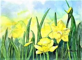 NZ Artist Blank Greeting Card Daffodils