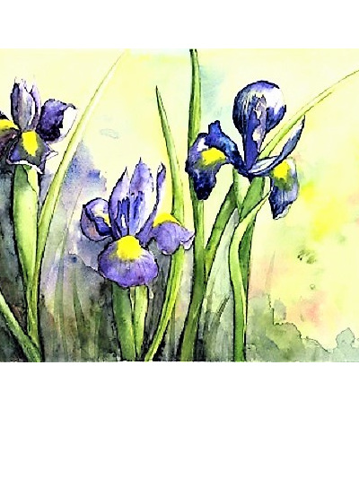 NZ Artist Blank Greeting Card Dutch Iris