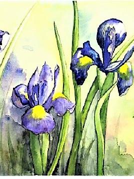NZ Artist Blank Greeting Card Dutch Iris
