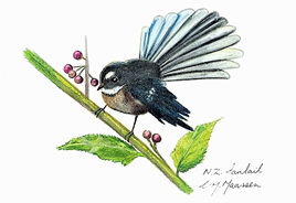 NZ Artist Blank Greeting Card Fantail