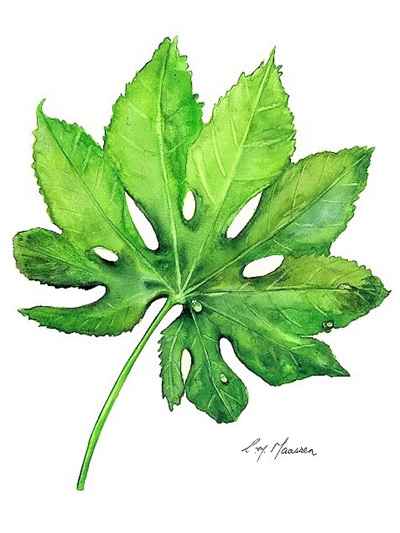 NZ Artist Blank Greeting Card Fatsia Leaf